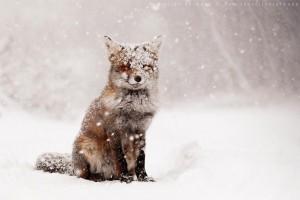 lija-snijeg